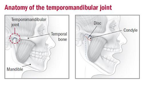 temporal mandibular joint